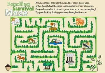 Forestry Maze