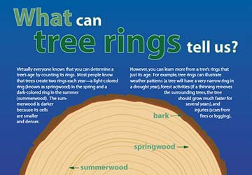 What are Tree Rings?